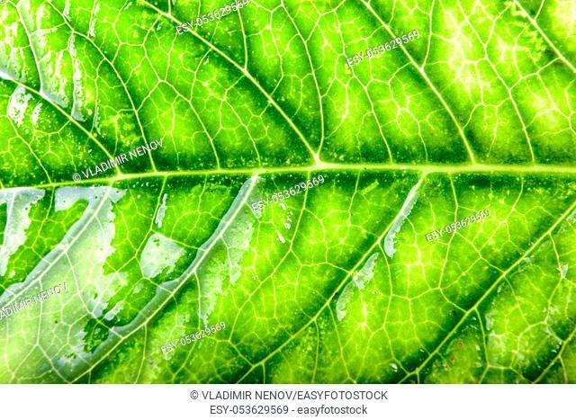 Green Leaf Background. Color image