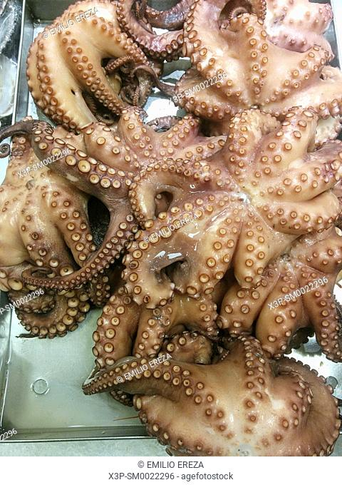 Octopuses for sale