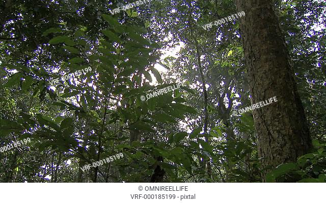 Forest canopy with sunshine behind