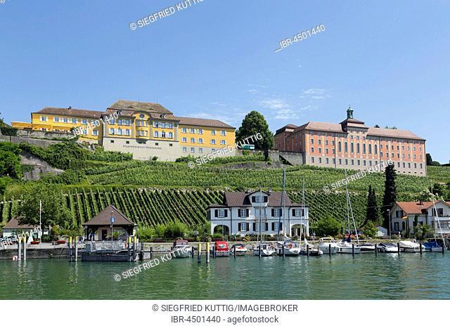 Statsweingut Meersburg, vineyard, Lake Constance, Baden-Württemberg, Germany