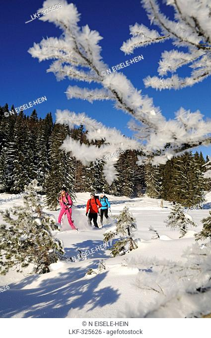 People snowshoeing in snowy landscape, Hemmersuppenalm, Reit im Winkl, Chiemgau, Upper Bavaria, Bavaria, Germany, Europe