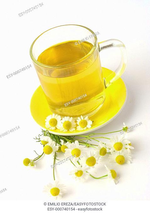 Camomile infusion Matricaria chamomilla