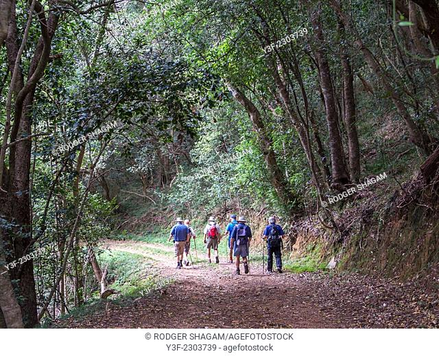 A group of men on a forest hiking trail. Cape Town, South Africa