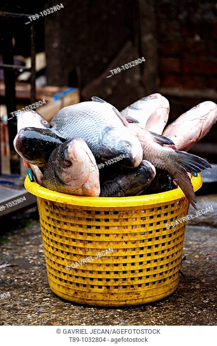 Fish in the basket in the morning fish market in Yangon