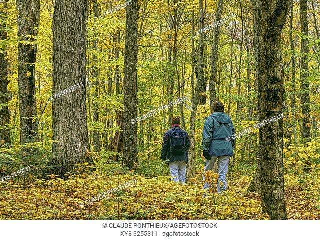 Two young people walking along a maple trees forest trail in autumn, Frontenac National Park; Québec, Canada