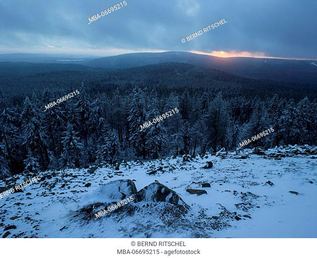 Winter forest at sunset at the Achtermannshöhe, Harz, Lower Saxony, Germany
