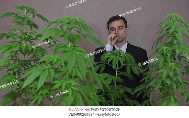 Happy businessman with Cannabis plants smoking Marijuana joint