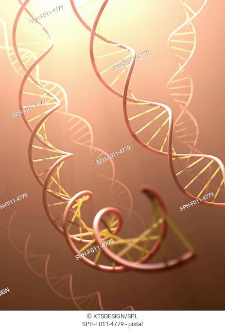 Deoxyribonucleic acid (DNA) structure, computer illustration