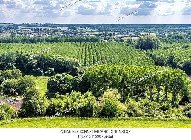 France, Gironde, Sainte-Croix-du-Mont, poplar groves of the Garonne valley seen from Tastes castle