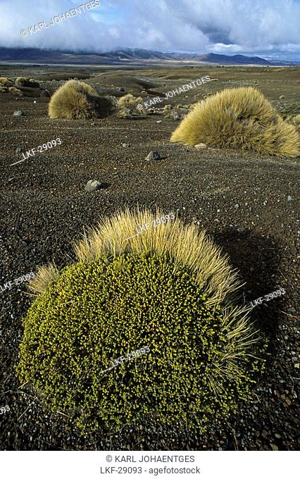 Volcanic landscape of lava and tussock grass, Rangipo Desert, Tongariro National Park, North Island, New Zealand