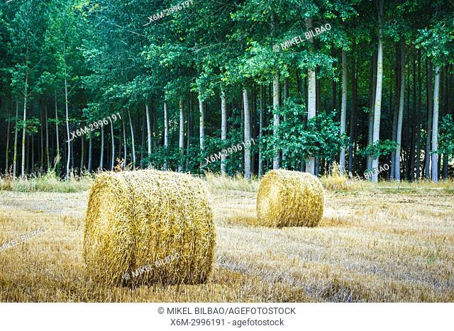 Wheat bales. Santa Cruz de Campezo, Campezo. Alava, Basque Country, Spain, Europe
