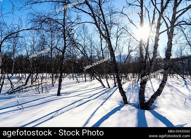 Sweden, Abisko National Park, winter landscape, sunbeams