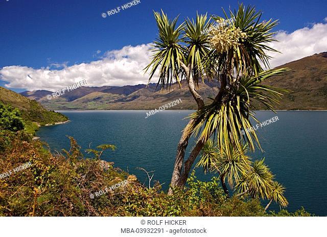 New Zealand, South-island, Central Otago, lake Wanaka, Cabbage Tree, Cordyline australis, destination, landscape, nature, lake, Wannake-Lake, view, shore