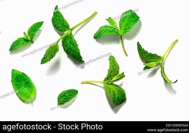 Mint leaf set on white background