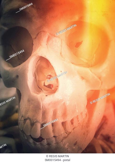 closeup of a plastic human skull, with light flare