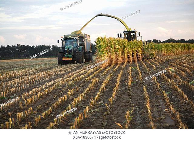 Harvester and trailer farm machinery harvesting sweet corn, Shottisham, Suffolk, England