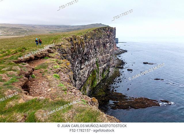 Latrabjarg bird cliffs, Westfjords, Iceland, Europe