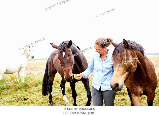 Woman feeding horses in field