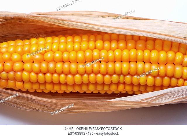 An ear of ripe corn