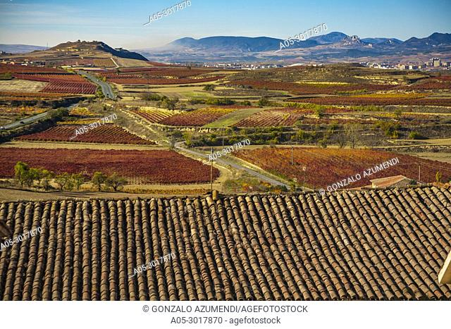 Vineyards in Autum around Briones village. La Rioja. Spain