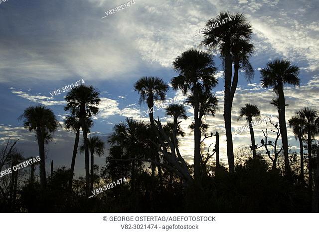 Palm silhouette, Orlando Wetlands Park, Florida