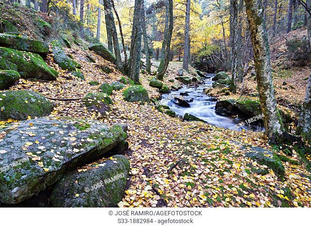 Sestil de Maillo stream in the Sierra de Guadarrama  Canencia  Madrid  Spain