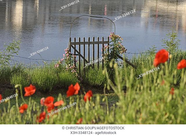 garden by the Loire River, Amboise, Touraine, department of Indre-et-Loire, Centre-Val de Loire region, France, Europe