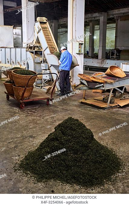 China, Sichuan province, Mingshan, tea factory
