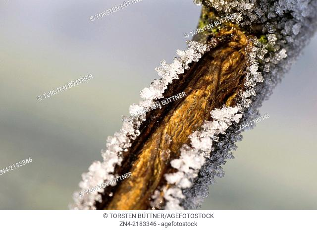 Ice crystals on a tree branch on Magdalenaberg Hill in Bad Schallerbach, Austria