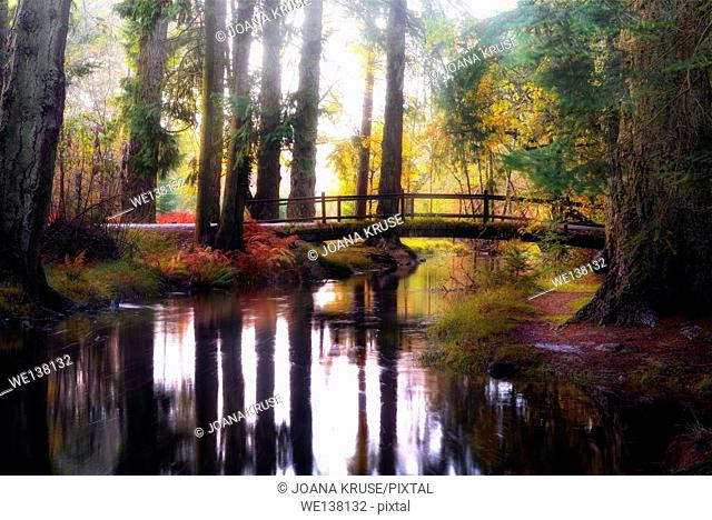 New Forest, Rhinefield, Blackwater, Hampshire, England, UK