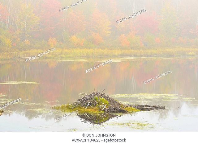 A foggy beaver pond in autumn, Greater Sudbury, Ontario, Canada