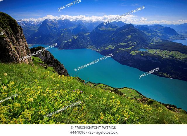 Alps, view, view from Fronalpstock, mountain, mountain panorama, mountains, flowers, Fronalpstock, body of water, water, Morschach, panorama, Pilatus