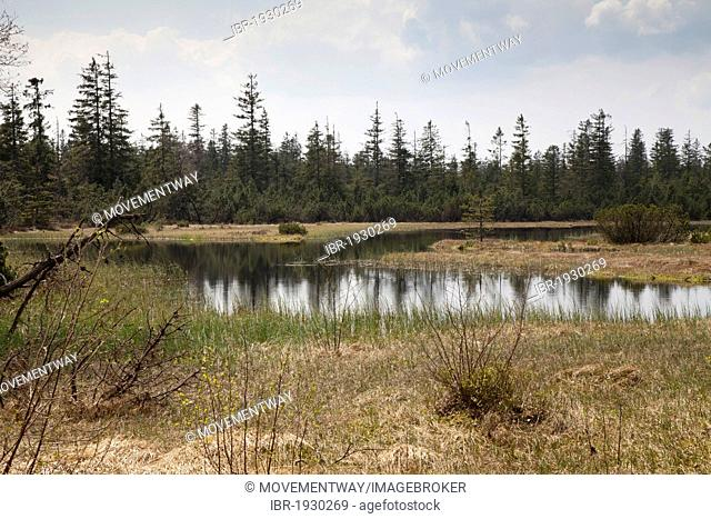 Lake Hohlohsee, Naturschutzgebiet Wildseemoor nature reserve, Kaltenbronn, Gernsbach, Black Forest, Baden-Wuerttemberg, Germany, Europe