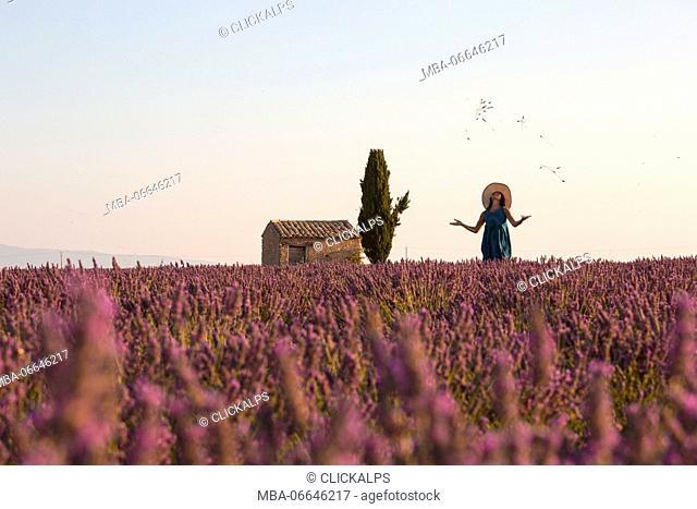 Europe, France,Provence Alpes Cote d'Azur,Plateau de Valensole. Woman in lavender field