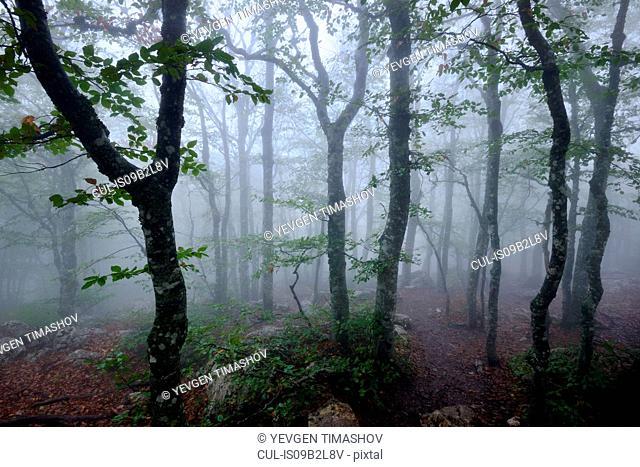 Misty forest, Crimea, Ukraine