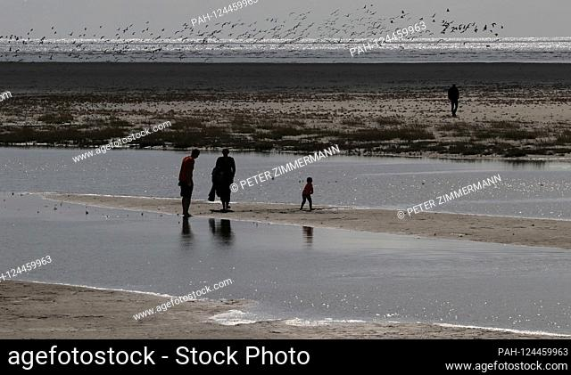 Landscape in the Schleswig-Holstein Wadden Sea National Park near St. Peter-Ording, taken on 14.09.2019. Sankt Peter-Ording is a popular North Sea spa on the...