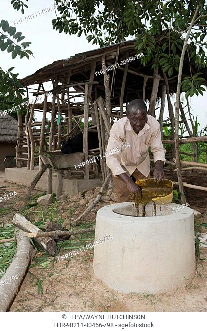 Farmer putting dairy cow manure into collecting pit, which will collect gas to enable family to have gas light and cookers, Uganda, June