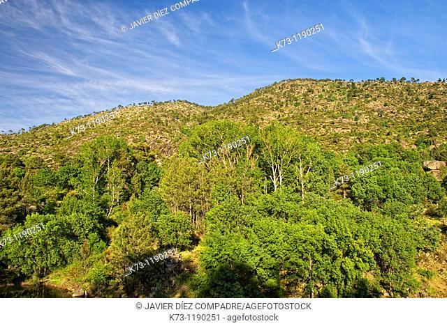 Burguillo Reservoir  Iruelas Valley Natural Reserve  Avila province  Castilla y Leon  Spain