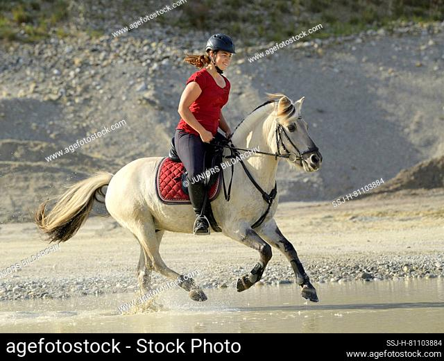 Rider on back of a Norwegian Fjord horse cantering in a gravel pit. Germany