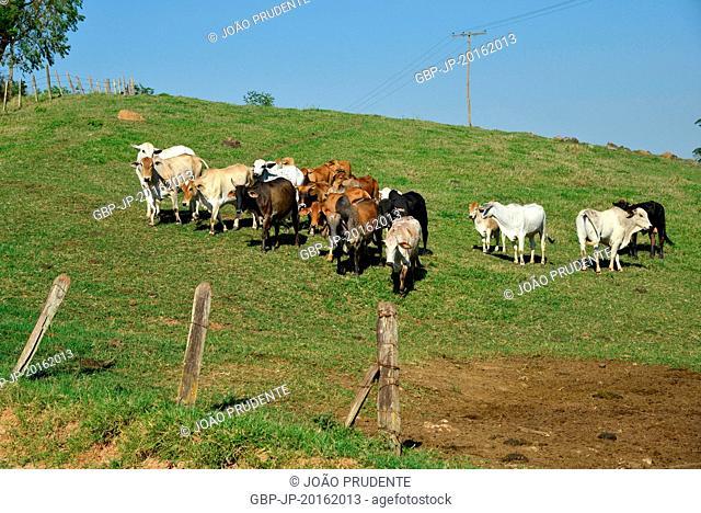 Livestock breeding in rural areas, Munhoz, Minas Gerais, Brazil, 10.2015