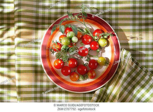 Fresh tomato cherry Bunch of Italian Tuscan cultivation area
