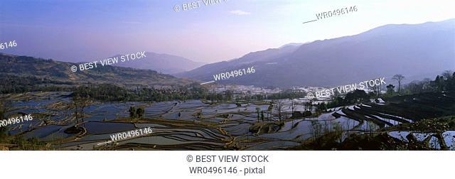 Yunnan Yuanyangtitian