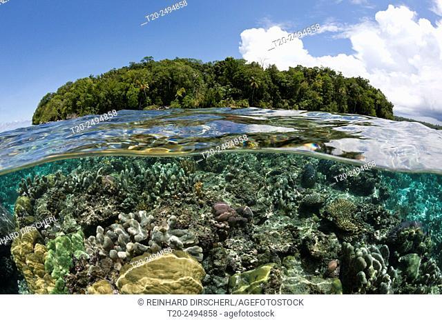 Corals on Reef Top, Marovo Lagoon, Solomon Islands