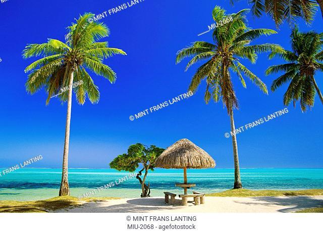 Palm trees on a beach in Bora Bora, Tahiti