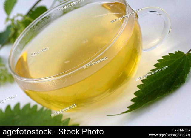 Cup with nettle tea (Urtica dioica)