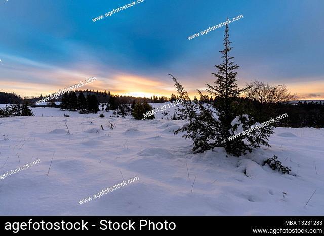 Winter, winter world, snow, juniper heather, sunrise, Swabian Alb, Baden-Wuerttemberg, Germany, Europe