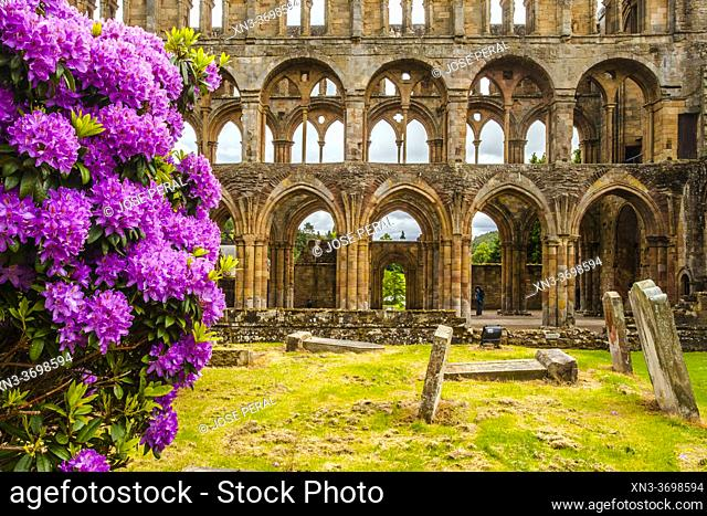 Jedburgh Abbey, a ruined Augustinian abbey, Jedburgh, is one of the four great abbeys established in the Scottish Borders in the 1100s