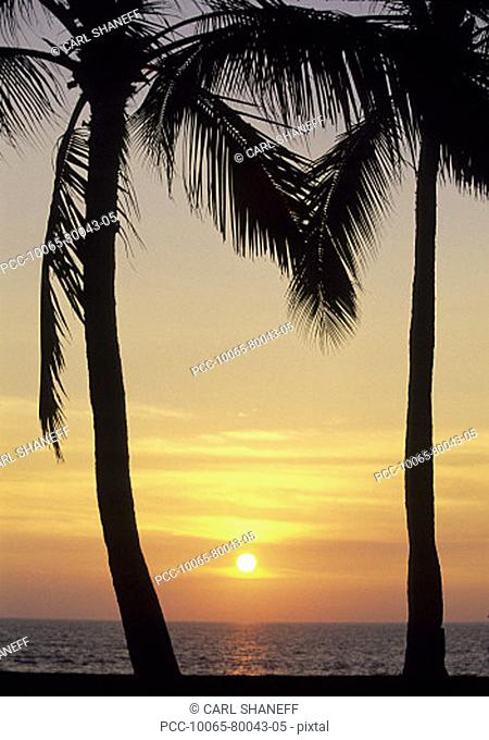 Palm trees silhouetted by bright yellow sunset sky