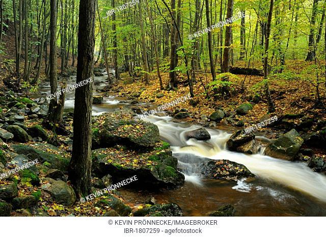 Autumn landscape along the mountain stream of Ilse, Harz, Saxony-Anhalt, Germany, Europe