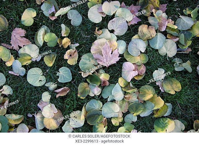 Spain, Madrid, El Retiro Park, Leaves lying on grass